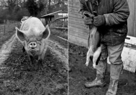 regula-ysewijn-photography-pig-rearing-11