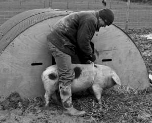 regula-ysewijn-pig-course-3
