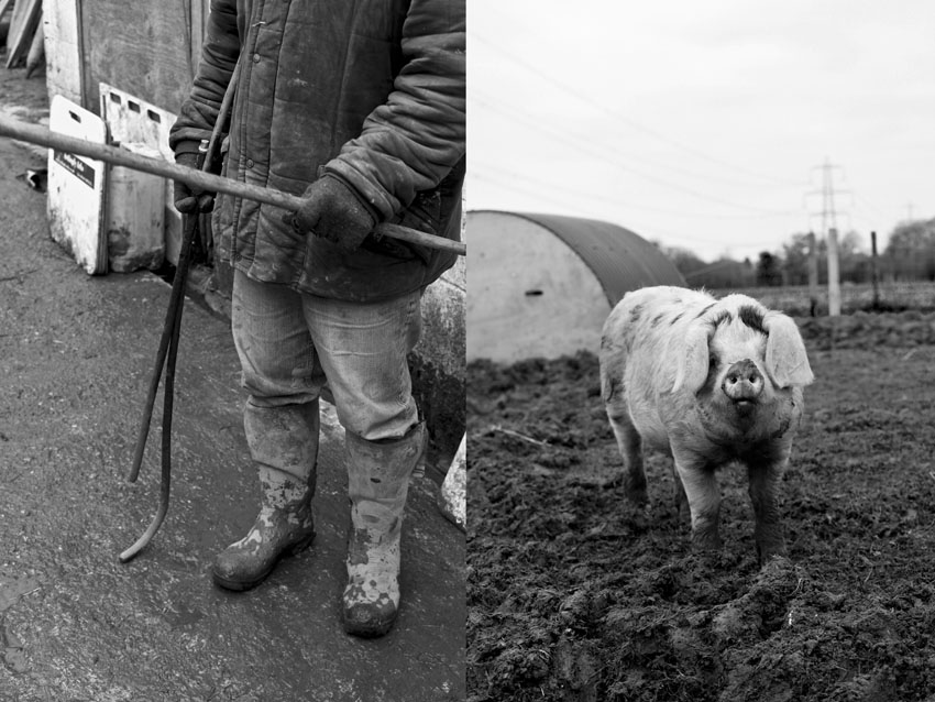 regula-ysewijn-pig-course-A
