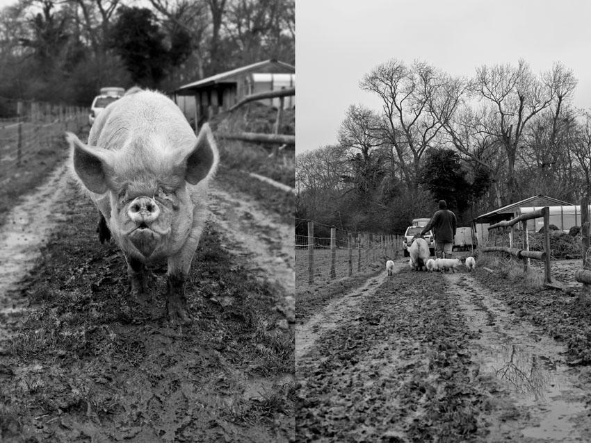regula-ysewijn-pig-rearing-C
